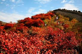 the Best Places to See Autumn Leaves in Beijing