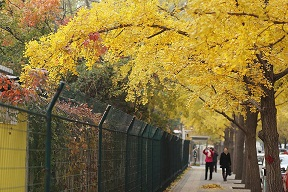 Best Places to See Autumn Leaves in Beijing