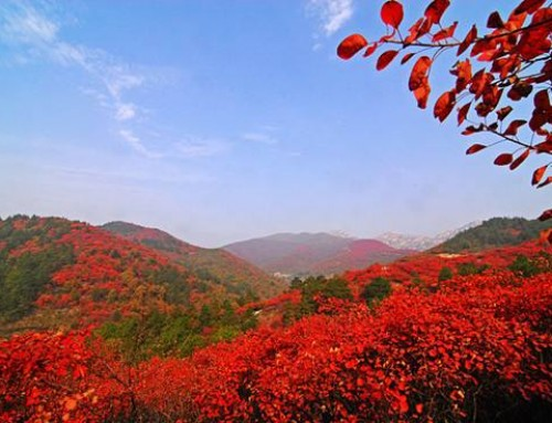 6 of the Best Places to See Autumn Leaves in Beijing